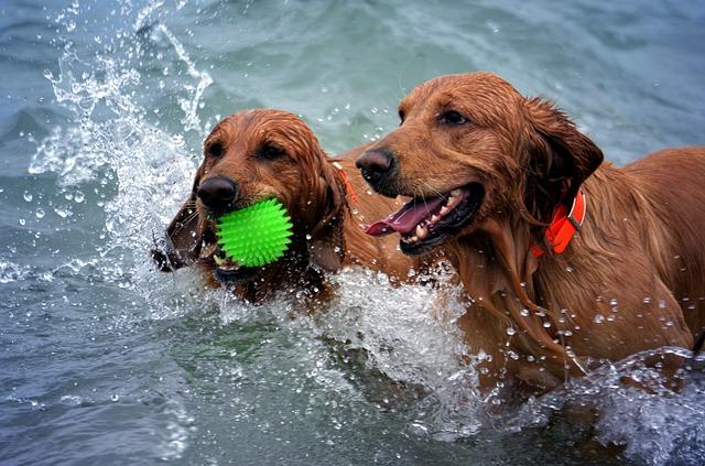 psi ve vodě