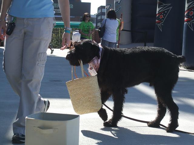pes s taškou